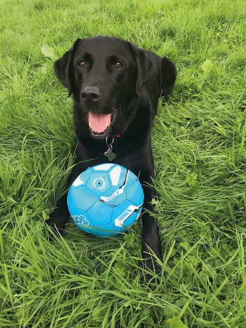 Guide Dogs planning for the future after Covid