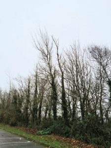 Remediation and replacement tree works at Ardgillan Demesne