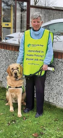 Puppy raising for Irish Guide Dogs